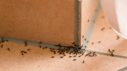 ants_house_thinkstock_edited