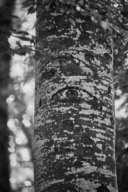 """""""Augen in der Großstadt"""""""