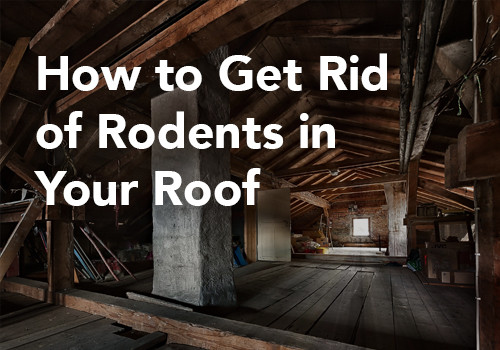 How to Get Rid of Rodents in Your Roof