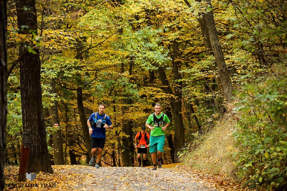 Panoráma Trail erdő.jpg