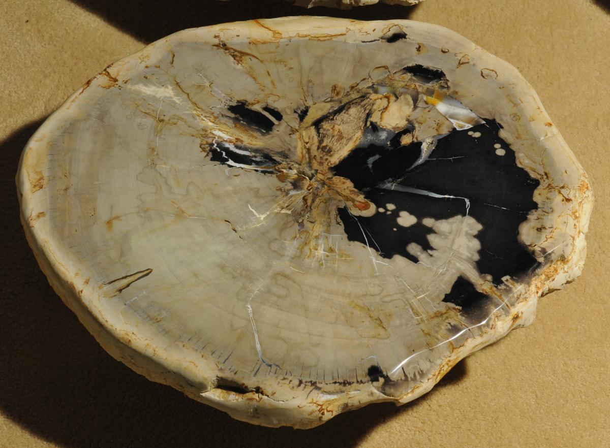 Tafel Versteend Hout : Bijzettafels versteend hout