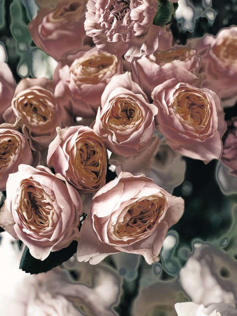 EDIT anniversary-beautiful-blooming-9311