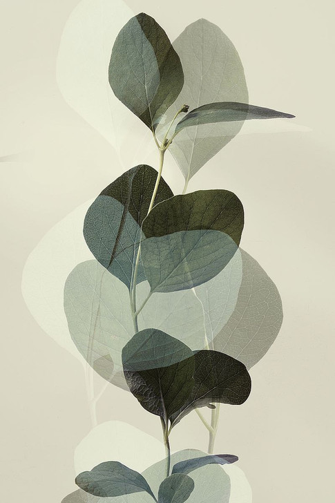 W1170D Green Leaves 8