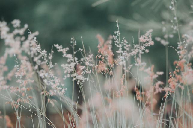 flora-flowers-grass-268261.jpeg