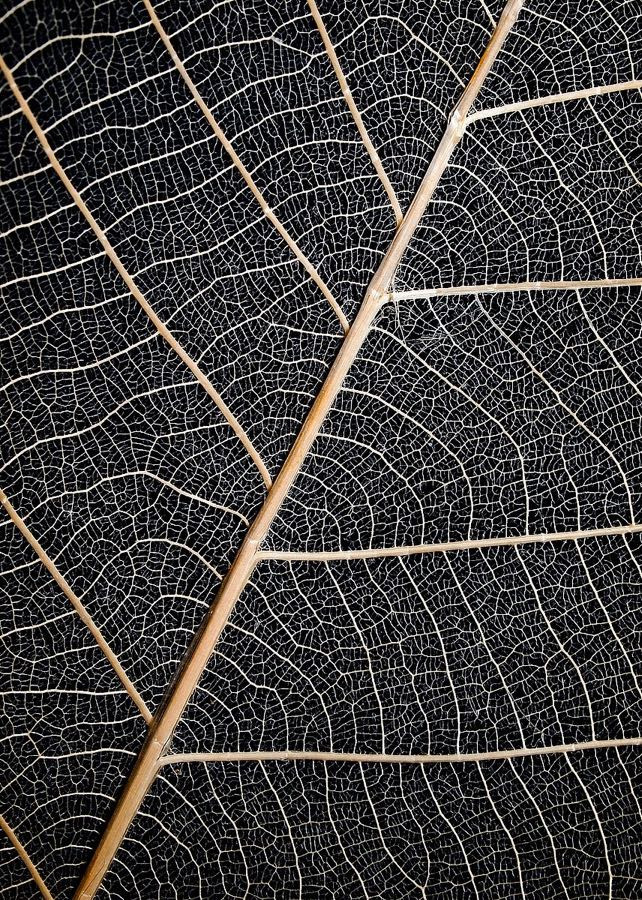 MF969-0894 Leaf Veins Resizable, in stock