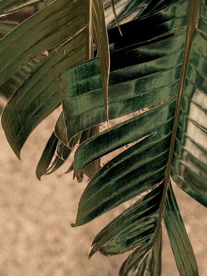 EDIT banana-leaves-blur-close-up-2516653