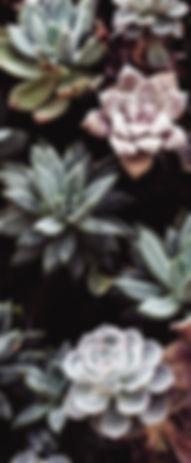 botanical-cactuses-close-up-305827.jpeg