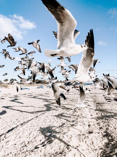 animal-photography-animals-beach-1974491