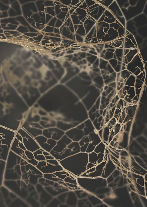 MF969-1220 Leaf Skeleton Dark Resizable