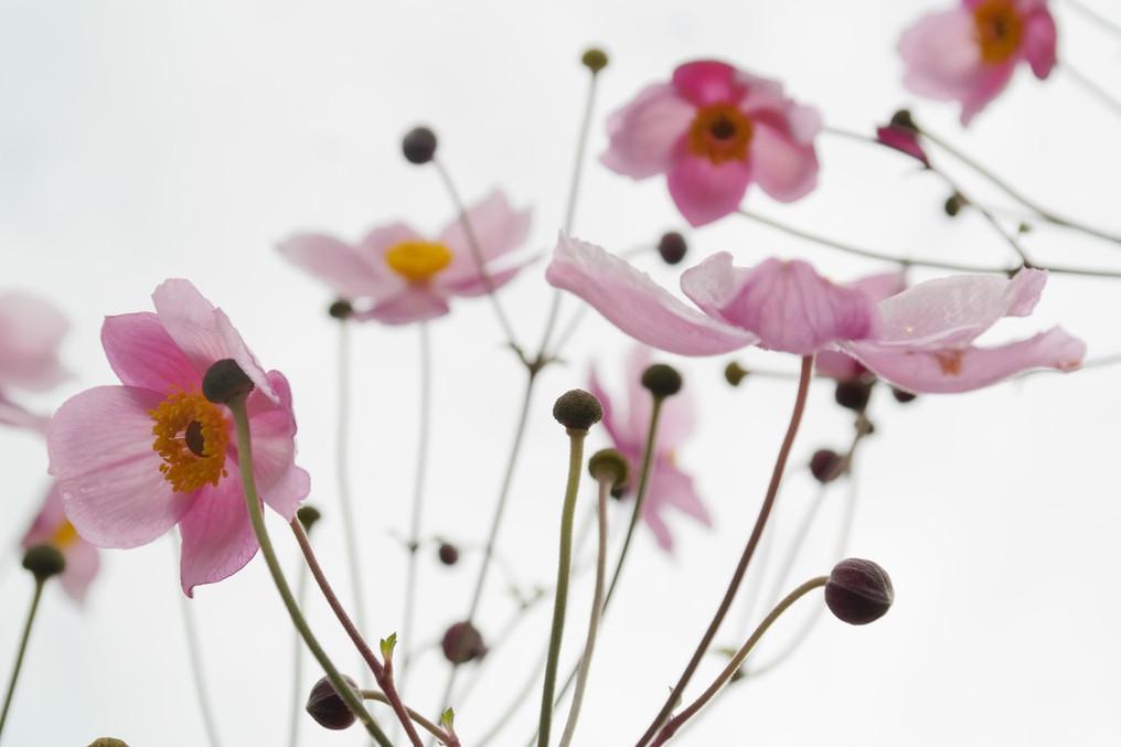 bloeien-bloemblaadjes-bloemen-60602.jpeg