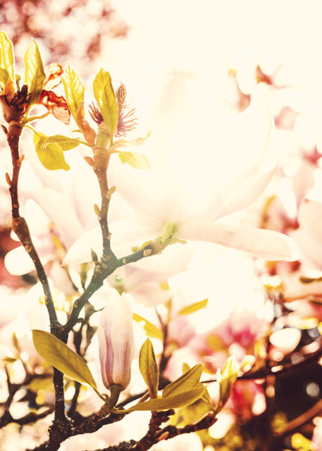EDIT beautiful-beautiful-flowers-bloom-2