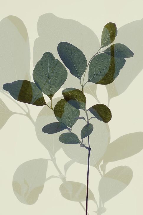 W1169D Green Leaves 7