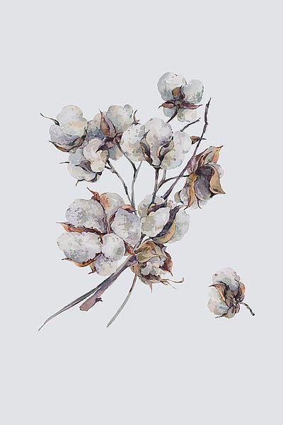 IN99099 Incado Cotton III  Resizable