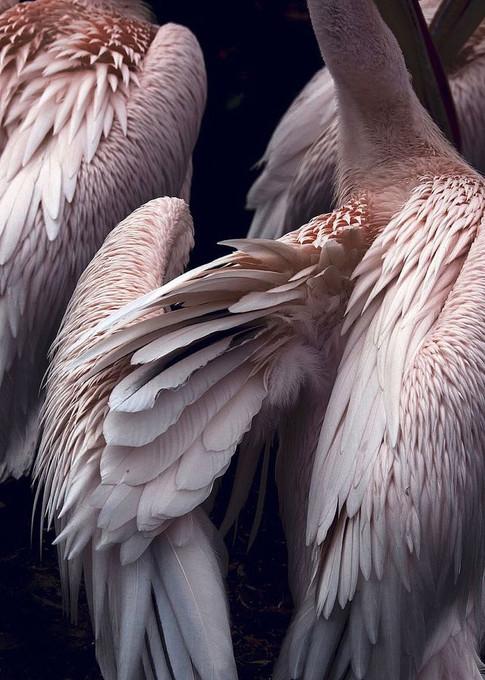 MF969-1085 Flamingo Resizable