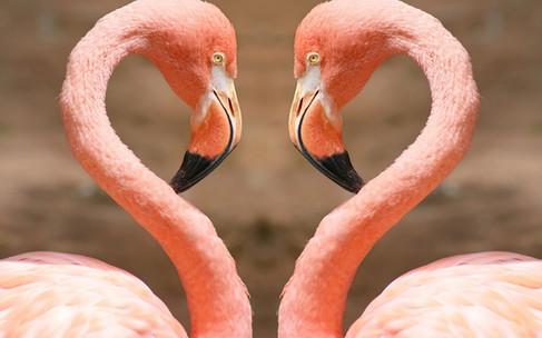 Foto op plexiglas / dibond  Flamingo heart