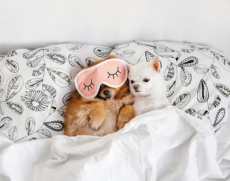 Šunų ir kačių priežiūros mokymai su praktika