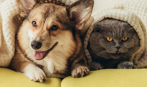 """""""Gyvūnų prižiūrėtojo veikla – ką daryti, kad meilė gyvūnams taptų pelninga?"""""""