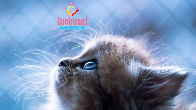 Sunkissed Suncatchers Kitten Curiosity.j