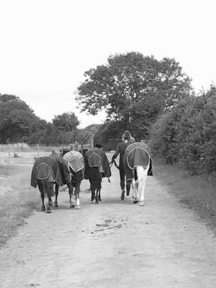 gen-ponies.jpg