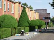 Hyacinthstraat
