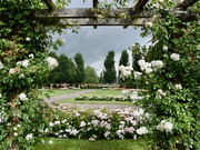 Rosarium - Pioenpark