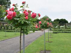 Pioenpark / Rosarium