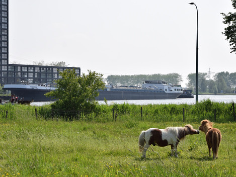 Oostersluis / Zwaaikom