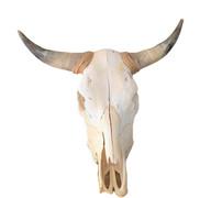 Bull Horn Skull