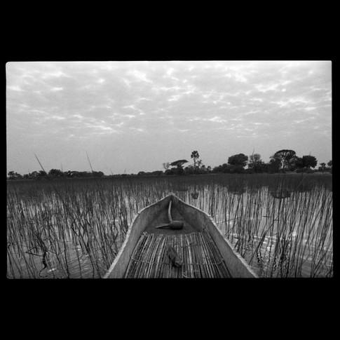 Okavango Swamps