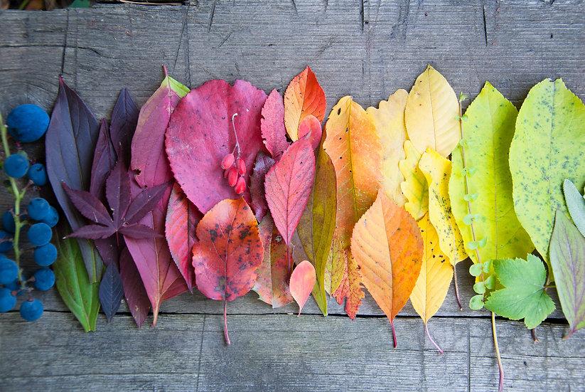 Lebensfreude, bunte Blätter, Gestalten,