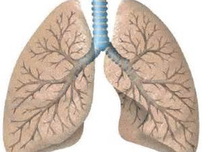 Décodage bronche
