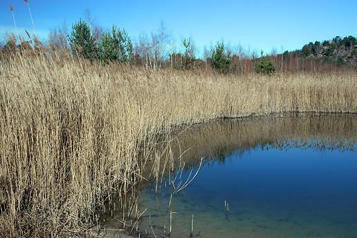 Forêt de Fontainebleau 023