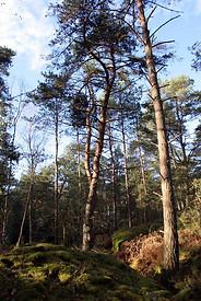 Forêt de Fontainebleau 035