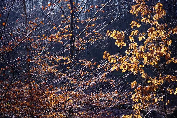 Forêt de Fontainebleau 034