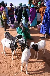 Vallée du fleuve Sénégal 037