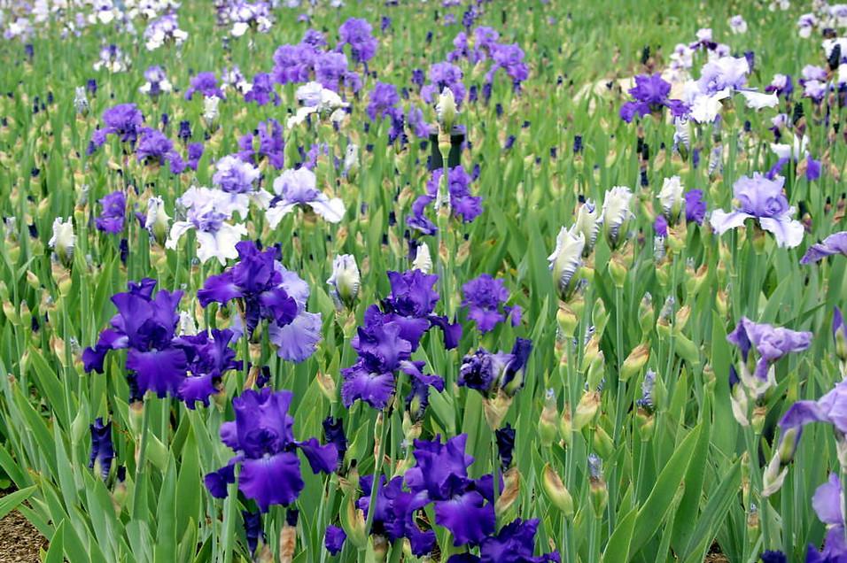 Parc floral de la Source 020