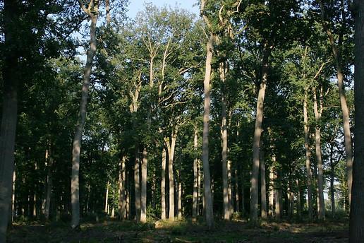 Forêt de Fontainebleau 029