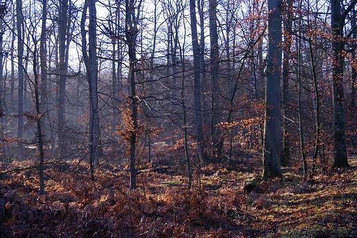 Forêt de Fontainebleau 024