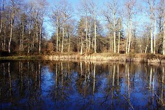 Forêt de Fontainebleau 015