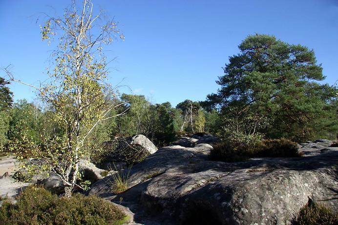 Forêt de Fontainebleau 017