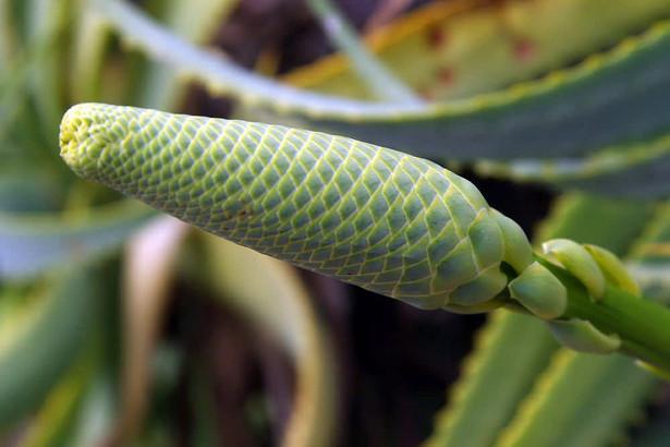 Jardins botaniques de Kirstenbosch 029