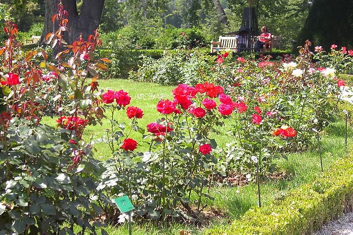 Jardins de Bagatelle 004