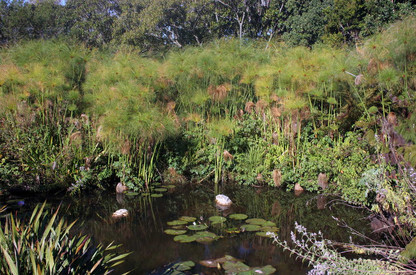 Jardins botaniques de Kirstenbosch 003