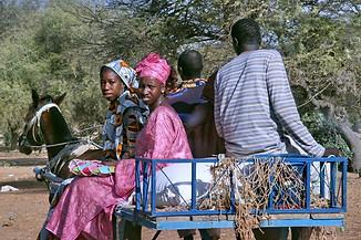 Vallée du fleuve Sénégal 032