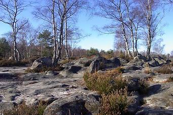 Forêt de Fontainebleau 008