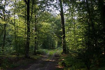 Forêt de Fontainebleau 032