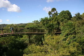 Jardins botaniques de Kirstenbosch 001