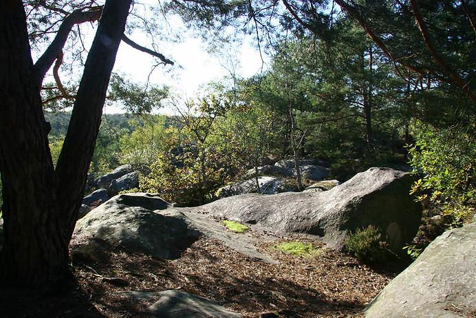 Forêt de Fontainebleau 027