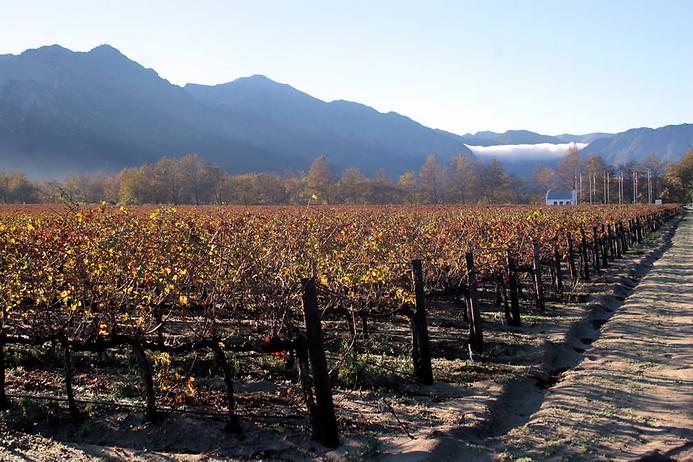 Route des Vignobles 016