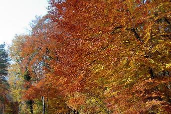 Forêt de Fontainebleau 013